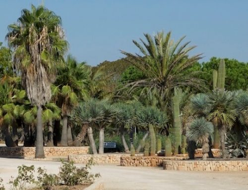 Botanicactus Mallorca – Ses Salines