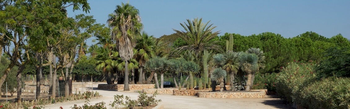 Botanicus Ses Salines