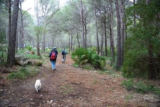 Wanderweg zur Cala Figuera
